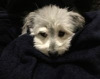 Puppy love royalty free stock photos