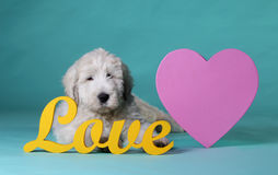 Puppy in love Royalty Free Stock Photography