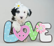 Puppy Love Stock Photos