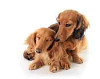 Puppy love stock image