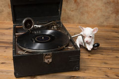 Puppy loves music Royalty Free Stock Photography
