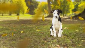 Puppy always loves a walk in the park royalty free stock image