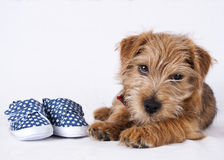 Puppy lying beside baby shoes royalty free stock photos