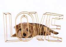 Puppy lying behind the word love stock photo