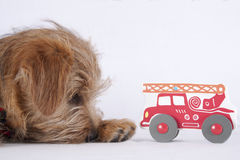 Puppy lying beside a children's toy stock photography