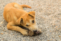 Puppy lying on the gravel Stock Photography