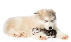Puppy lying with a sleeping kitten. isolated on white background.  Royalty Free Stock Photography
