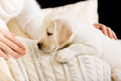Puppy lying on white bedspread near the hands of woman Stock Images