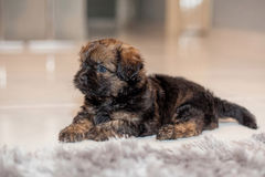 Puppy. Macro photography showing a close up view of beauty flora and fauna Royalty Free Stock Photo