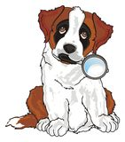 Puppy with magnifier. St. bernard sit and hold on his mouth a magnifier Stock Photo