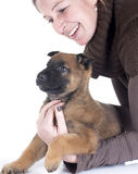 Puppy malinois and woman. In front of white background Royalty Free Stock Photos