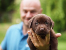 Puppy and man Stock Photos