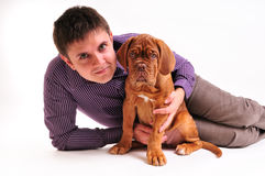 Puppy with man. Puppy of Dogue de Bordeaux with Man Stock Photos