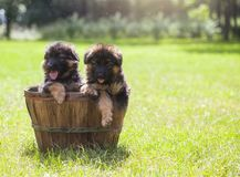 Puppy in mand stock foto