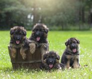 Puppy in mand royalty-vrije stock foto