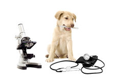 Puppy and medical equipment Royalty Free Stock Photos