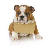 Puppy with a message Stock Photos