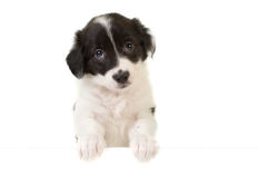 Puppy with a message card Stock Photo