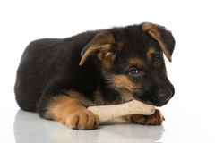 Puppy met been Stock Foto's