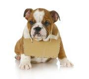 Puppy met een bericht Stock Foto's