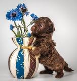 Puppy met een vaas stock afbeeldingen
