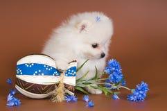 Puppy met een vaas stock afbeelding
