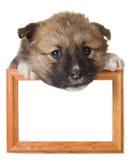 Puppy met frame stock afbeelding
