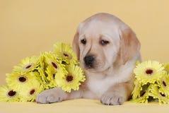 Puppy met gele bloemen royalty-vrije stock afbeeldingen