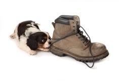 Puppy met oude laars stock afbeelding