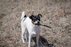 Puppy met Stok stock afbeelding