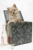 Puppy in Milk Box royalty free stock photography