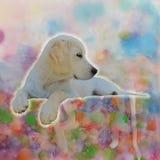 Puppy& x27; mondo del pastello di s fotografia stock