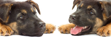 Puppy muzzle close up Stock Image