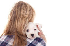 Puppy on my shoulder Stock Photos