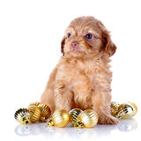 Puppy with New Year's balls. Stock Images