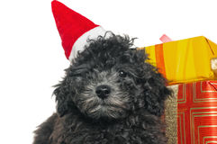 Puppy  with New Year's gifts Royalty Free Stock Photography