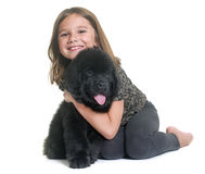 Puppy newfoundland dog and child Stock Images