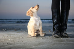 Puppy next to the boots looking up Royalty Free Stock Image