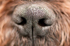 Puppy nose. Macro image of black puppy nose Royalty Free Stock Photography