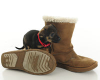 Puppy Among Old Boots Stock Images