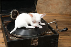 Puppy on old record player Royalty Free Stock Photos