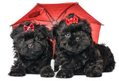 Puppy onder umbre royalty-vrije stock foto's