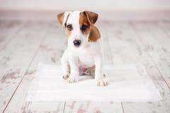 Puppy op absorberende draagstoel royalty-vrije stock afbeelding