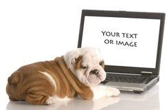 Puppy op computer Stock Fotografie