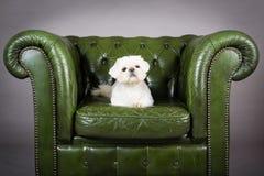 Puppy op de stoel stock afbeelding