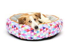 Puppy op een warme draagstoel Royalty-vrije Stock Fotografie