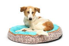 Puppy op een warme draagstoel Stock Foto's