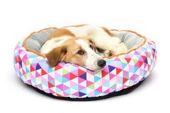 Puppy op een warme draagstoel Royalty-vrije Stock Foto's