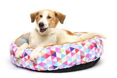 Puppy op een warme draagstoel Stock Foto
