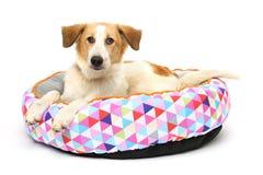 Puppy op een warme draagstoel Royalty-vrije Stock Afbeeldingen